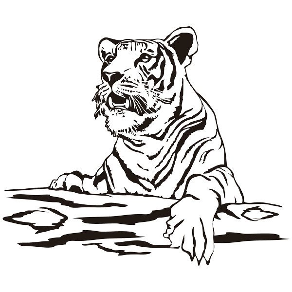 Stickers muraux: Tiger sur un journal