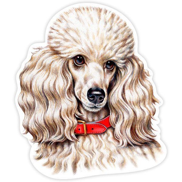Autocollants: White Miniature Poodle