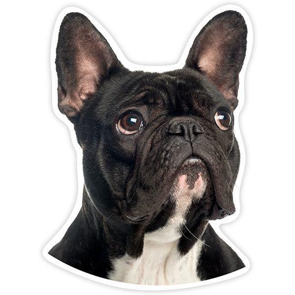 Autocollants: French Bulldog