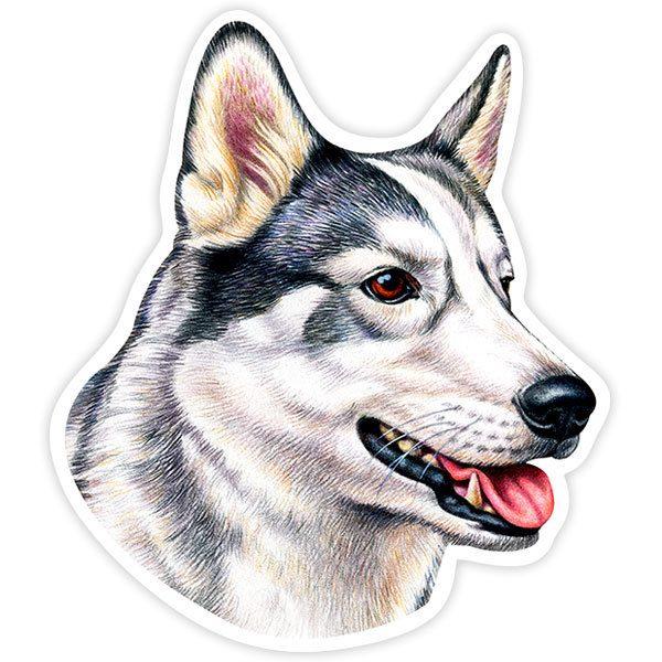 Autocollants: Siberian Husky