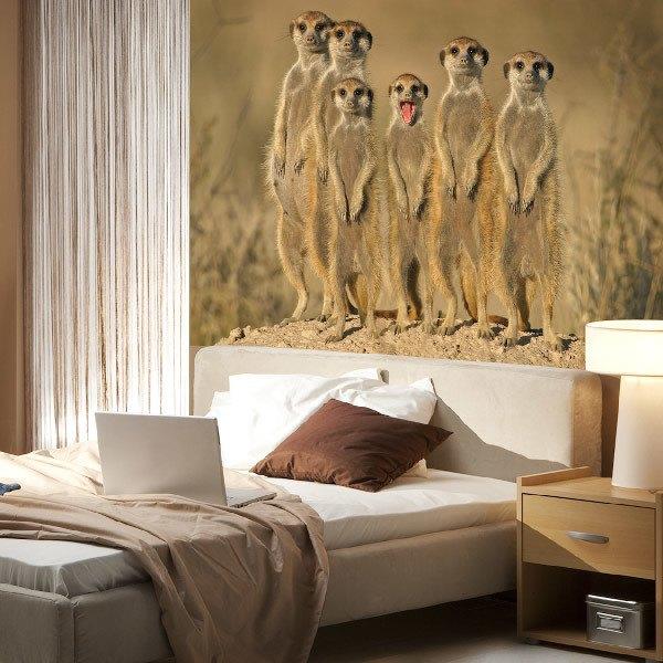Papier peint vinyle: Meerkats