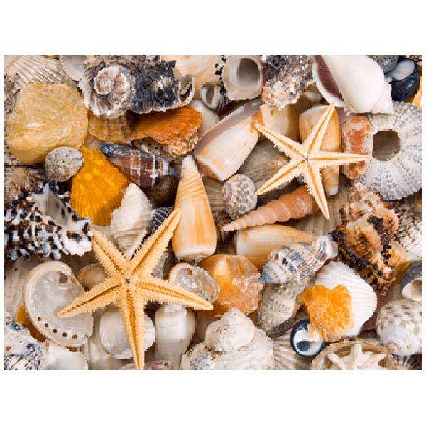 Stickers muraux: Spécialités de la mer