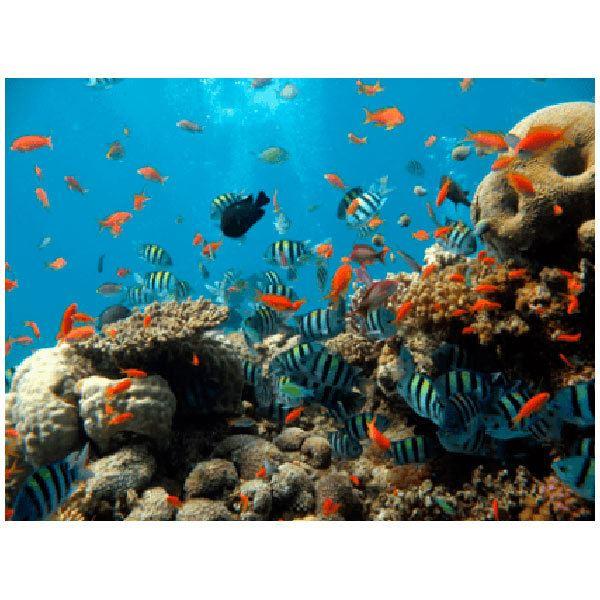 Stickers muraux: Fond de la mer