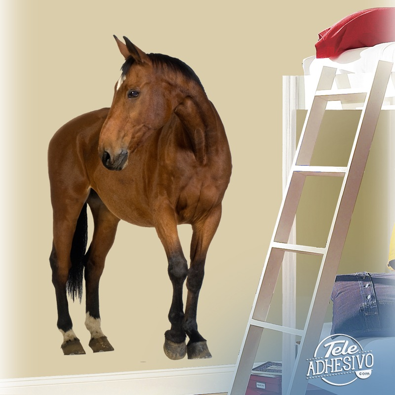 Stickers muraux: Cheval brun