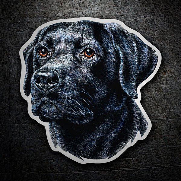 Autocollants: Black Labrador Retriever
