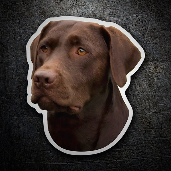 Autocollants: Chocolate Labrador Retriever