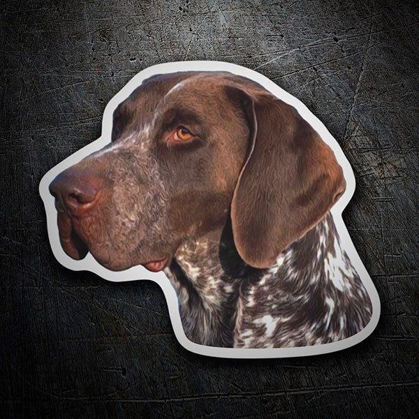 Autocollants: German Shorthaired Pointer