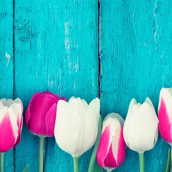 Stickers muraux: Tulipes roses et blanches