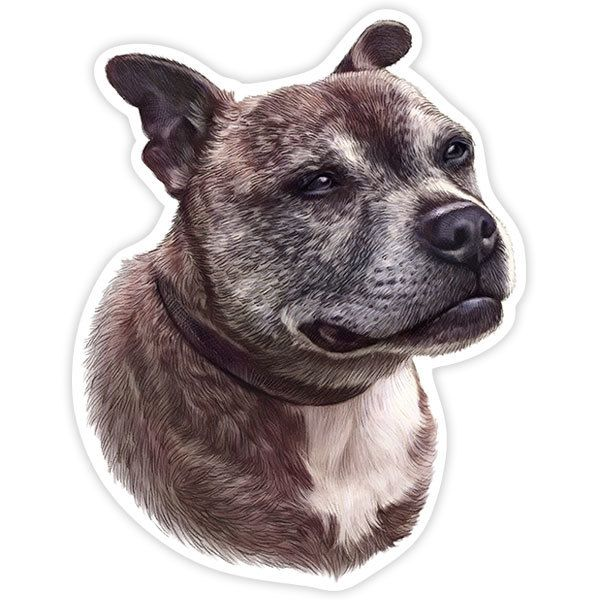 Autocollants: Staffordshire Bull Terrier