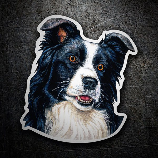 Autocollants: Border Collie