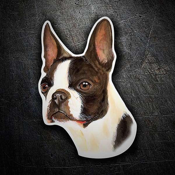 Autocollants: Boston Terrier
