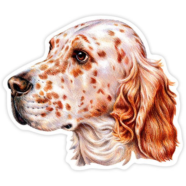Autocollants: English Setter