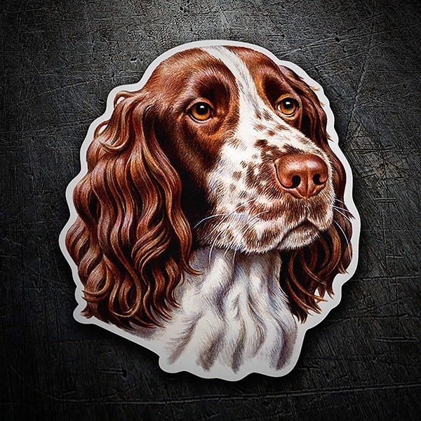 Autocollants: Springer Spaniel English