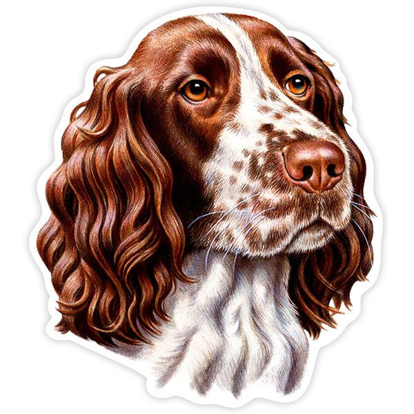 Autocollants: English Springer Spaniel